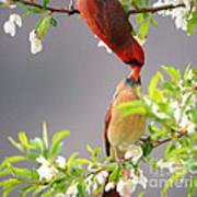 Cardinal Spring Love Art Print