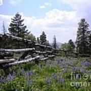 Spring Mountain Lupines 2 Art Print