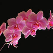 Spring Orchids Art Print by Juergen Roth