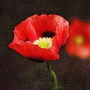 Spring Poppies Art Print