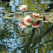 Spring Reflections Art Print