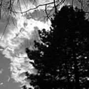Spring Sky And Pine 1 Bw Art Print
