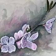 Spring Splendor Art Print