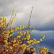 Spring Storm Art Print