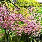 Spring Tree Blossoms Art Print