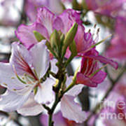 Spring Tree Blossoms Art Print