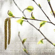 Spring Tree Branch Art Print