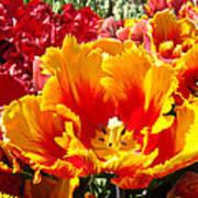 Spring Tulip Flowers Art Prints Yellow Red Tulip Art Print