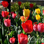 Spring Tulip Garden Art Print