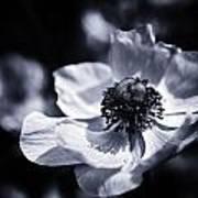 Spring White Dancing Art Print