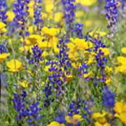 Spring Wildflower Bouquet  Art Print