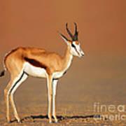 Springbok On Sandy Desert Plains Art Print