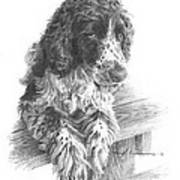 Springer Spaniel Dog Pencil Portrait Art Print