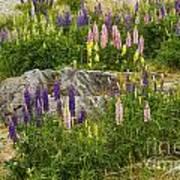 Springtime At Lake Tekapo Art Print