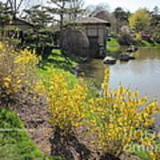 Springtime At The Japanese Gardens Art Print