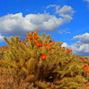 Springtime In Arizona Art Print