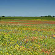 Springtime In Texas 2 Art Print