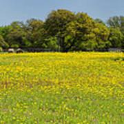 Springtime In Texas 3 Art Print