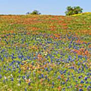 Springtime In Texas 5 Art Print