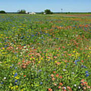 Springtime In Texas 6 Art Print