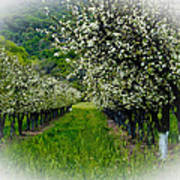 Springtime In The Orchard Art Print by Bill Gallagher