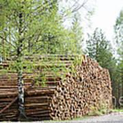 Springtime Logs Art Print