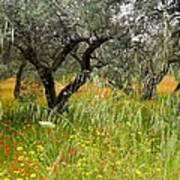 Springtime Sicily Art Print