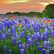 Springtime Sunset In Texas - Texas Bluebonnet Wildflowers Landscape Flowers Paintbrush Art Print by Jon Holiday