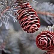 Spruce Cone Closeup II Art Print