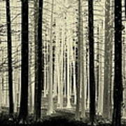 Spruce Magic Art Print