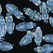 Squid Hatchlings Art Print