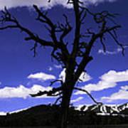 Squigly Tree Art Print