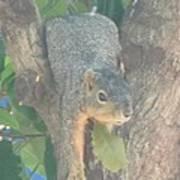 Squirrel Chillin Art Print