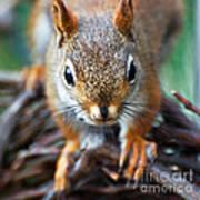 Squirrel Close-up Art Print