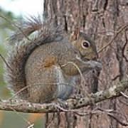 Squirrel Finds A Treat Art Print