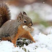 Squirrel In Snow Art Print