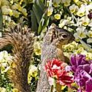 Squirrel In The Botanic Garden-dallas Arboretum V4 Art Print