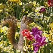 Squirrel In The Botanic Garden-dallas Arboretum V5 Art Print