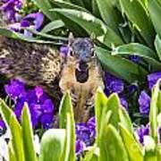 Squirrel In The Botanic Garden Art Print