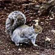 Squirrel In The Park-boston  V6 Art Print