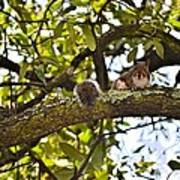 Squirrel On A Branch Art Print
