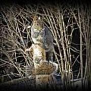 Squirrel On Birch Post Art Print