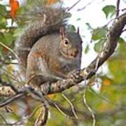 Squirrel On Branch Art Print