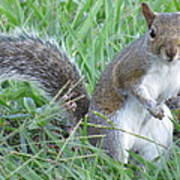 Squirrel On The Grass Art Print