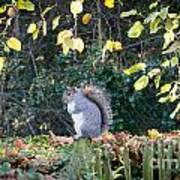Squirrel Perched Art Print