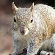 Squirrel Profile Art Print