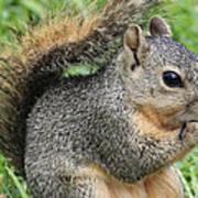 Squirrel Thief Art Print