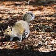 Squirrel Time Art Print