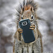 Squirrel With Cellphone Art Print