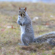 Squirrel With Dirt On Nose Art Print
